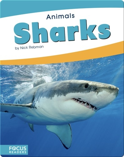 Animals: Sharks