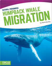 Natural Phenomena: Humpback Whale Migration