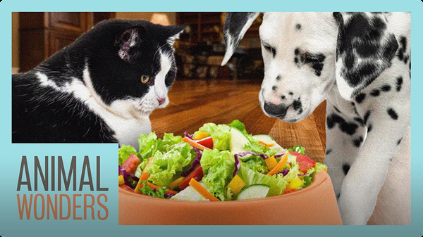 Is A Vegan Diet Bad For Dogs and Cats?