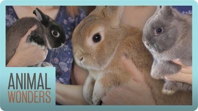 Rabbits, Rabbits, & More Rabbits!