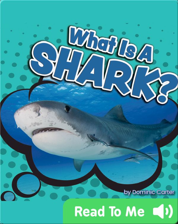 What Is a Shark?
