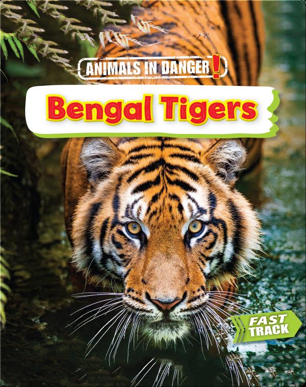 Animals in Danger: Bengal Tigers