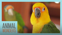 Meet And Greet: Ecuador the Jenday Conure