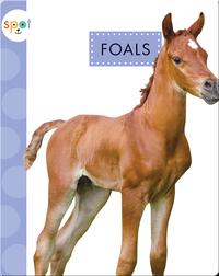 Baby Farm Animals: Foals