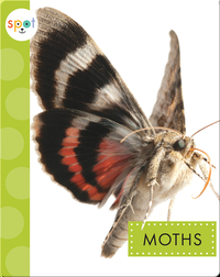 Creepy Crawlies: Moths
