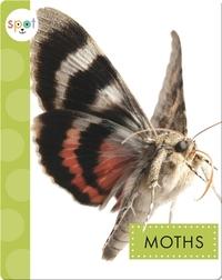 Creepy Crawlies: Moths
