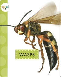 Creepy Crawlies: Wasps