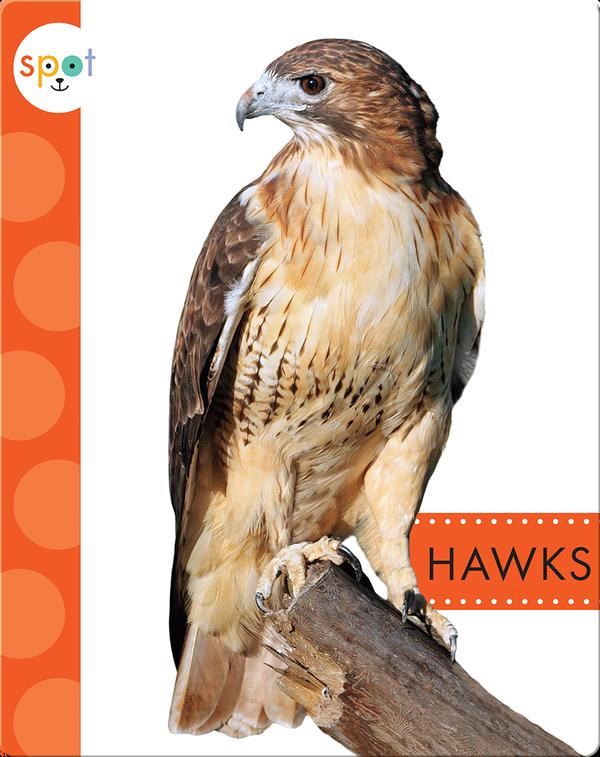 Backyard Animals: Hawks
