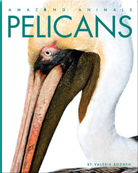Amazing Animals: Pelicans