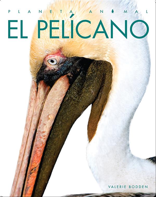 Planeta Animal: El Pelícano