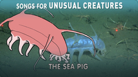 Songs for Unusual Creatures: The Sea Pig
