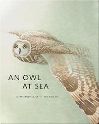 An Owl At Sea