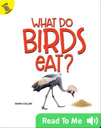 What Do Birds Eat?