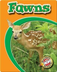 Fawns: Watch Animals Grow