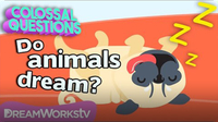 Do Animals Dream? | COLOSSAL QUESTIONS