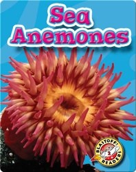 Sea Anemones: Oceans Alive