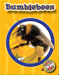 Bumblebees: World of Insects