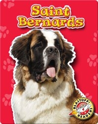 Saint Bernards: Dog Breeds