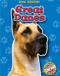 Great Danes: Dog Breeds