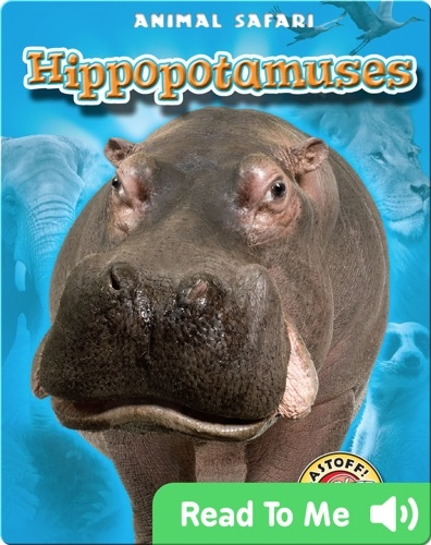 Hippopotamuses: Animal Safari