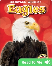 Eagles: Backyard Wildlife