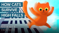How This Cat Survived A 32-Story Fall