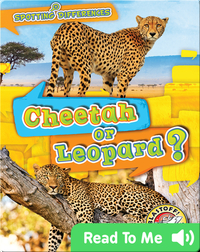 Cheetah or Leopard?