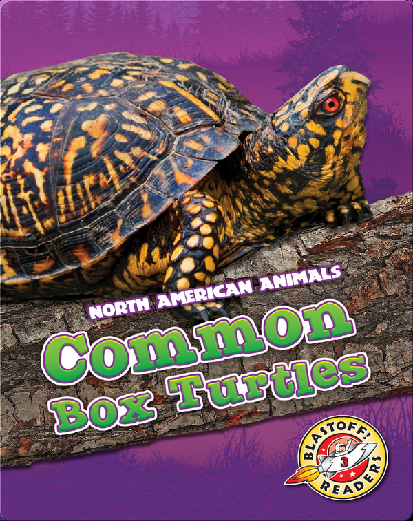 Common Box Turtles