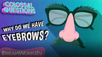 Why Do We Have Eyebrows? | COLOSSAL QUESTIONS