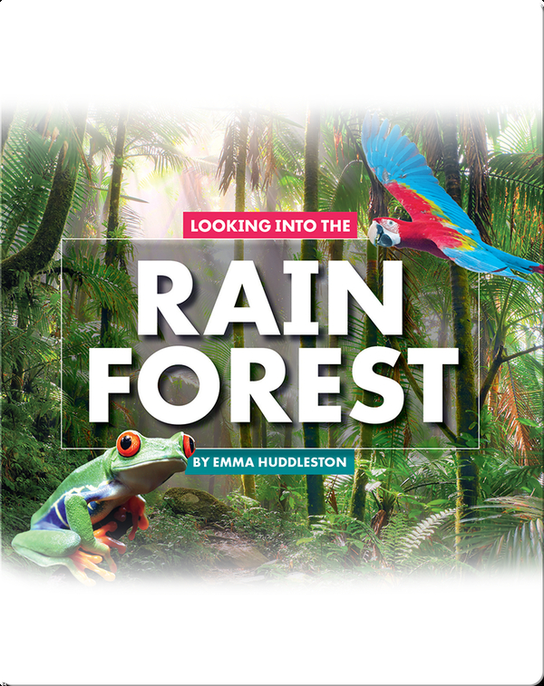 Looking at Layers: Looking Into the Rain Forest