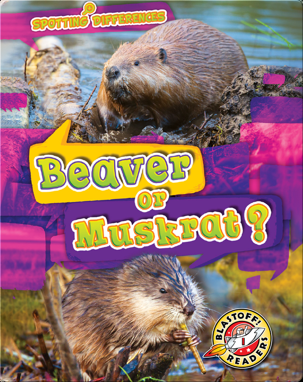 Spotting Differences: Beaver or Muskrat?