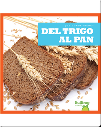Del trigo al pan (From Wheat to Bread)
