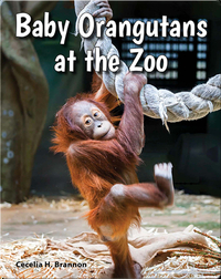 Baby Orangutans at the Zoo
