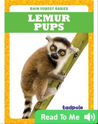 Rain Forest Babies: Lemur Pups