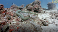 Jonathan Bird's Blue World: Sea Snakes
