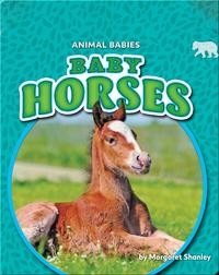 Animal Babies: Baby Horses