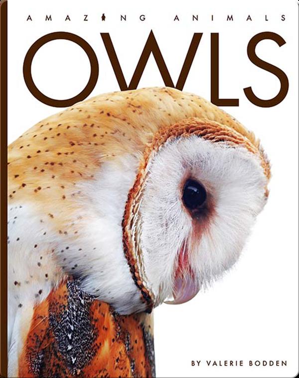 Amazing Animals: Owls