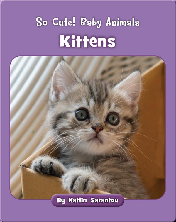 So Cute! Baby Animals Kittens