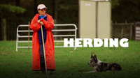 Dogs at Work: Herding Dogs