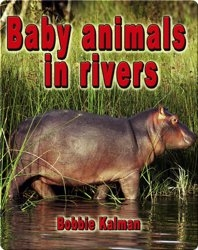 Baby Animals in Rivers