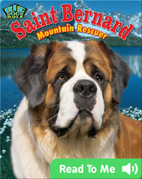 Saint Bernard: Mountain Rescuer