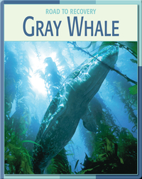 Road To Recovery: Gray Whale
