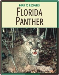 Road To Recovery: Florida Panther