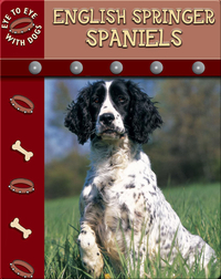 Eye To Eye With Dogs: English Springer Spaniels