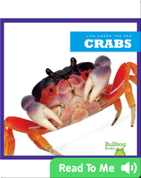Life Under The Sea: Crabs
