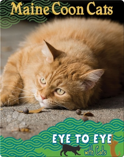 Eye To Eye With Cats: Maine Coon Cats