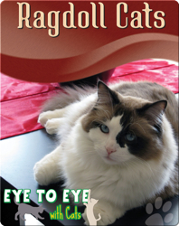 Eye To Eye With Cats: Ragdoll Cats