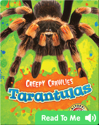 Creepy Crawlies: Tarantulas