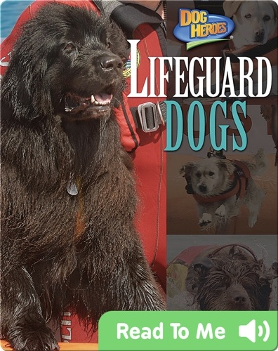 Lifeguard Dogs