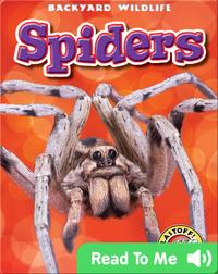 Spiders: Backyard Wildlife